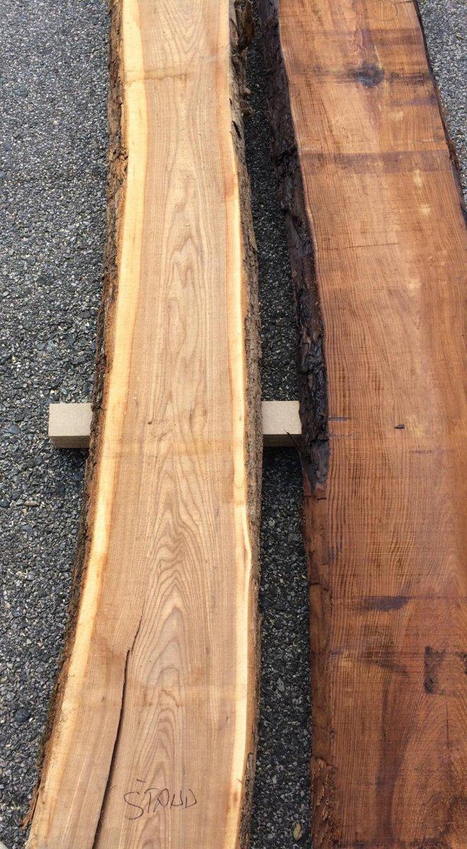 Výber drevín