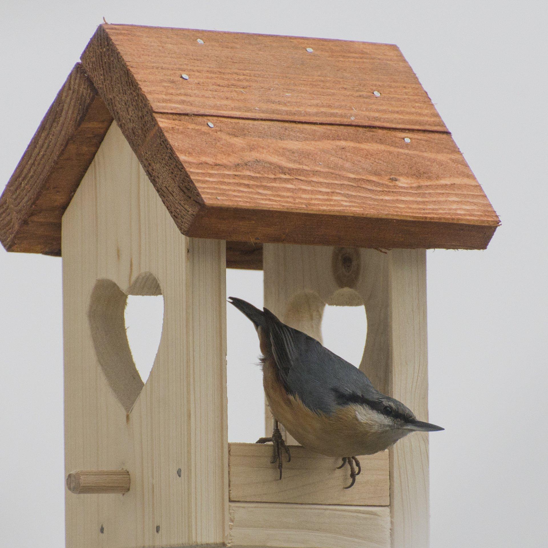 krmítko, vtáčiky na krmítku, woodyman