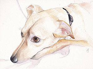 Obrazy - Portrét zvířátko akvarelem na zakázku - originál - 6915116_