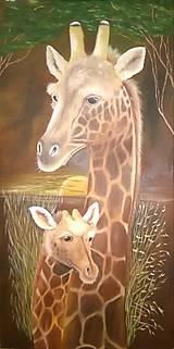 Obrazy - Žirafy - 6925258_