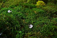 Obrazy - Machový obraz zo stabilizovaných rastlín na stenu - 6932986_