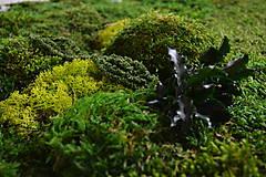 Obrazy - Machový obraz zo stabilizovaných rastlín na stenu - 6933099_