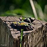 Náhrdelníky - Levanduľový les - náhrdelník s kvetmi - 6946543_