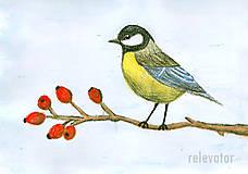 Kresby - Vták - 6963854_