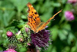 Fotografie - na motýlích krídlach - 6987390_