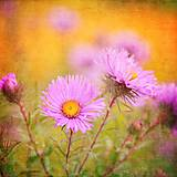 Fotografie - farebné leto - 6988994_