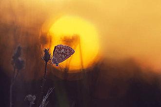 Fotografie - Pri zapade slnka - 7011301_