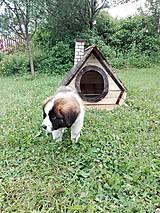 Pre zvieratká - Psia búda - 7022635_