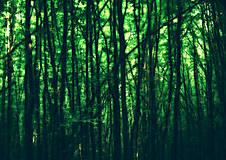 Obrazy - Mágia lesa - 7024292_
