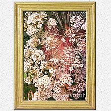 Obrázky - Obrázky (Ohňostroj kvetov) - 7026279_