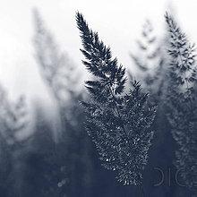 Fotografie - augustový vetrík - 7050625_