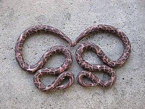 Náušnice - Hady tigrované - rozťahováky 2 ks č.540 - Akcia - 7054925_