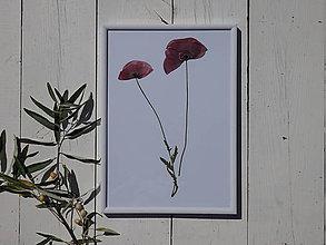 Obrázky - Obrázok z lisovaných rastlín - mak vlčí - 7114649_