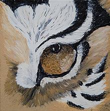 Obrazy - Oko tigra - 7114928_
