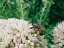 Fotografie - Poseď, včielka - 7123021_