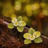 Orchidea Green - náušnice s kvetom