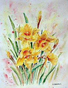 Obrazy - Narcisy (27 x 35) - 7179640_