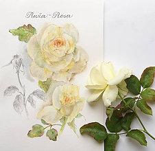 Obrazy - Zarámovaný obraz žlté ruže 1 - 7190036_