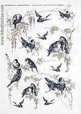 Papier - Ryžový papier Vtáčiky v modrom - 7193520_