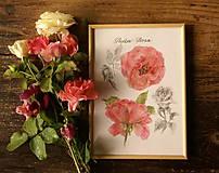 - Červená ruža, tlač A4 - 7191038_