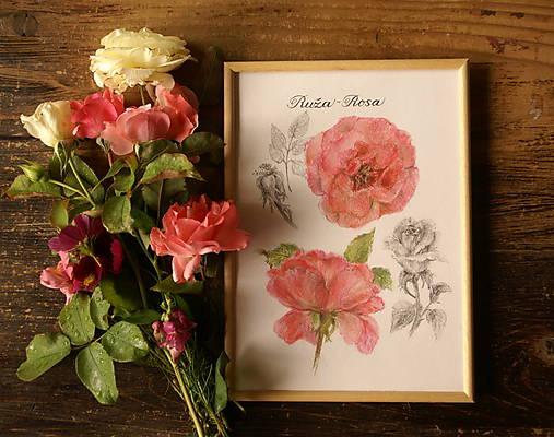 Obrazy - Červená ruža - 7191038_