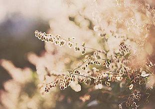 Grafika - Čaro jesenného svetla - 7200145_