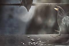 Obrazy - Clash Of The Titans III - 7254538_