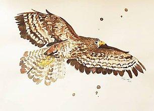 Kresby - Vtáctvo - ilustrácie, kresby a maľby A4 (Myšiek hôrny) - 7344341_