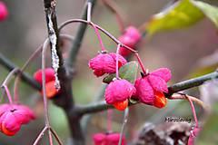 Fotografie - jesenná nálada - 7401577_