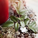 Dekorácie - Vianočný šiškový svietnik - 7422594_