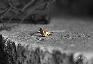 Prstene - strieborný prsteň - steampunk vtáčik - 7420732_