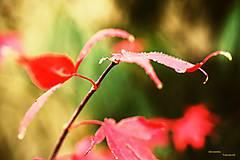 Fotografie - V jesennom šate - 7462228_