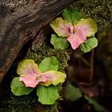 Zeleno-ružová orchidea - visiace kvetinové náušnice