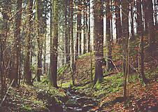 Obrazy - V lese - 7473339_
