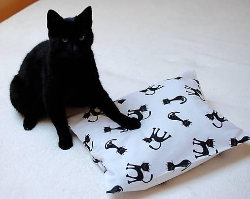 veľmi čierna mačička obrázky MILF sex s mladým mužom
