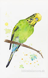 Obrazy - Andulka - akvarel - 7487337_