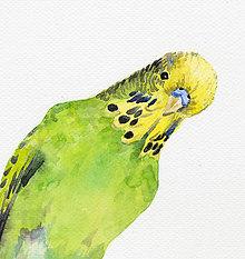 Obrazy - Andulka - akvarel - 7487940_