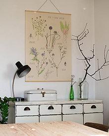 Obrázky - Retro botanický plagát - horské a lúčne kvety - 7486833_
