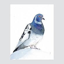 Obrazy - Holub na báni - originál, akvarel - 7505556_