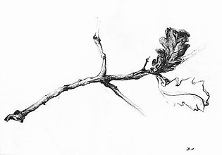 Kresby - Kesba realistická - větvička - 7547924_