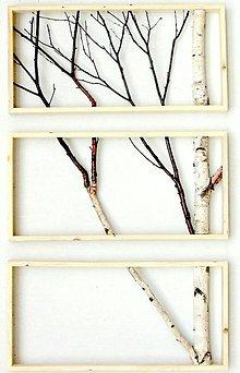 Obrázky - Obraz breza - HORIZONTÁL - 7547503_