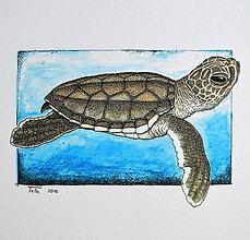 Kresby - Korytnačka vo farbách - 7554914_