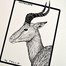 Kresby - Antilopa - 7566078_