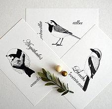 Kresby - Kolekcia obrázkov vtákov - 7571075_