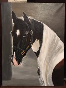 Obrazy - Obraz koňa - Pinto - 7577362_