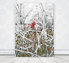 Fotografie - Fotografia - Šípky v zime - 7607256_