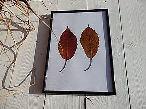 Obrázky - Obrázok z lisovaných rastlín - list jesenný II. - 7611369_