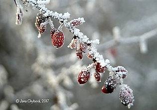 Fotografie - Zima I. - 7622612_
