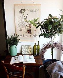Obrázky - Retro botanický plagát - archangelika lekárska - 7621448_