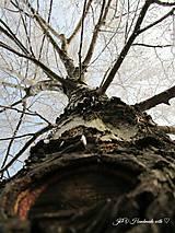 Fotografie - Strom života - 7621326_